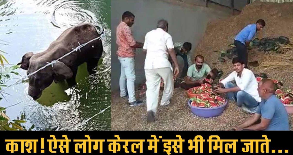 मेंगलवा में गायों की सेवा कर रहे लोगों से केरला के लोगों को सीख लेनी चाहिए