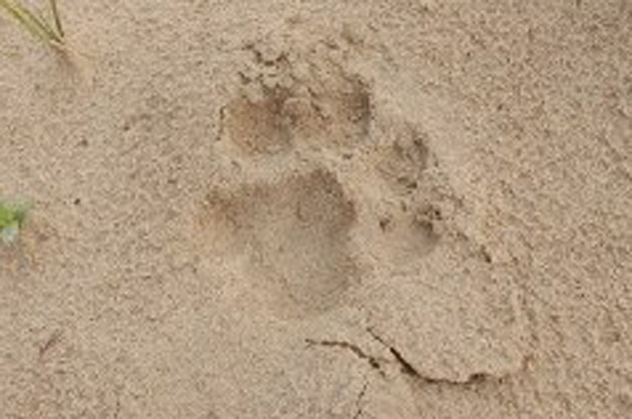 Panther reached here near Sanchore, but this is still the situation